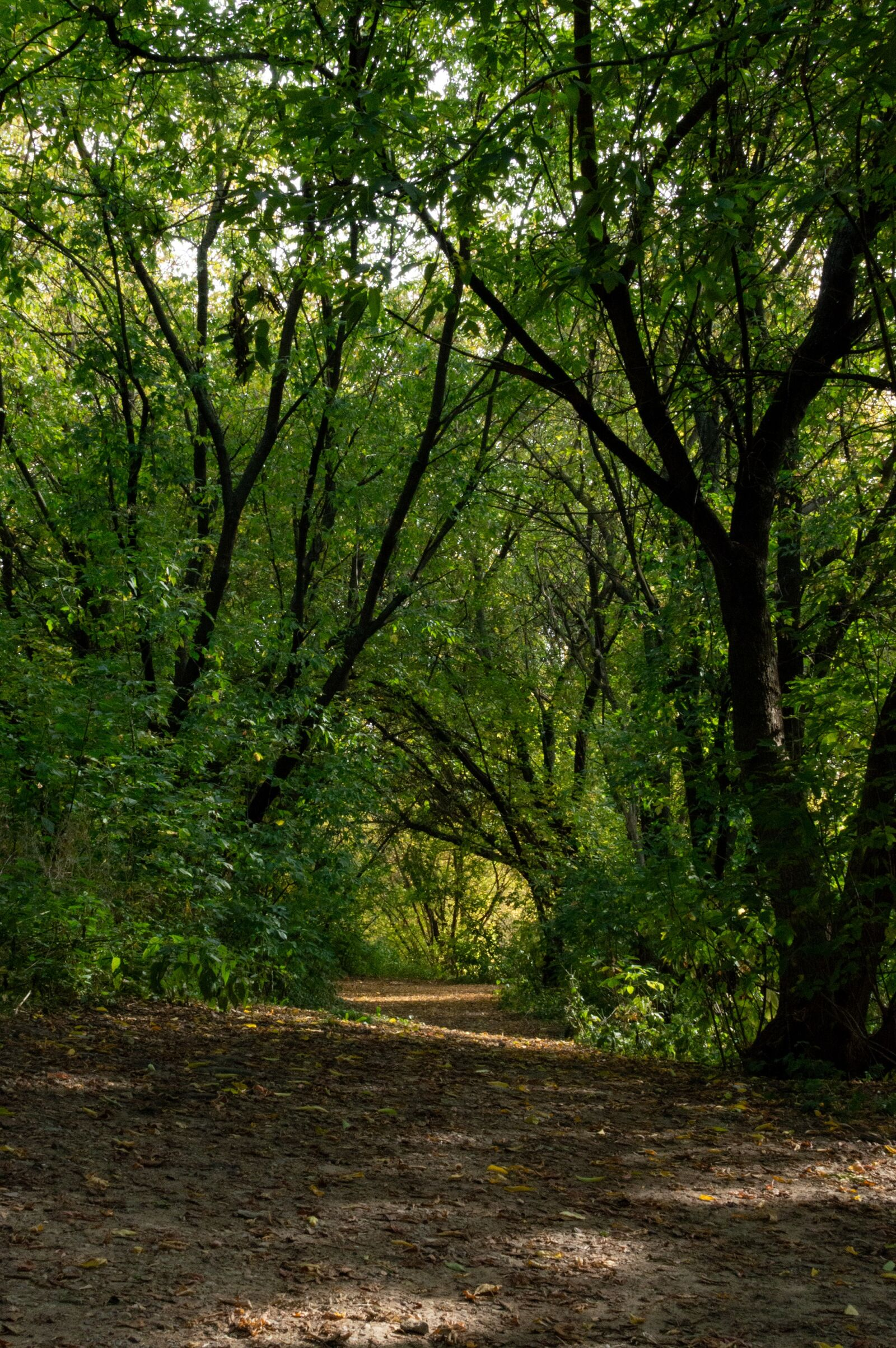 """Nikon D3200 sample photo. """"Forest, trail, stroll"""" photography"""