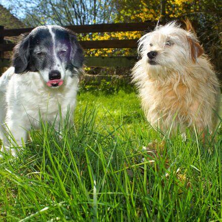 dogs, garden, enjoy weather, Sony SLT-A99V