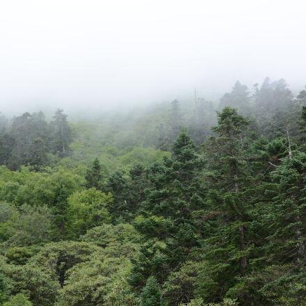 fog, foggy, forest, mountain, Nikon D7100
