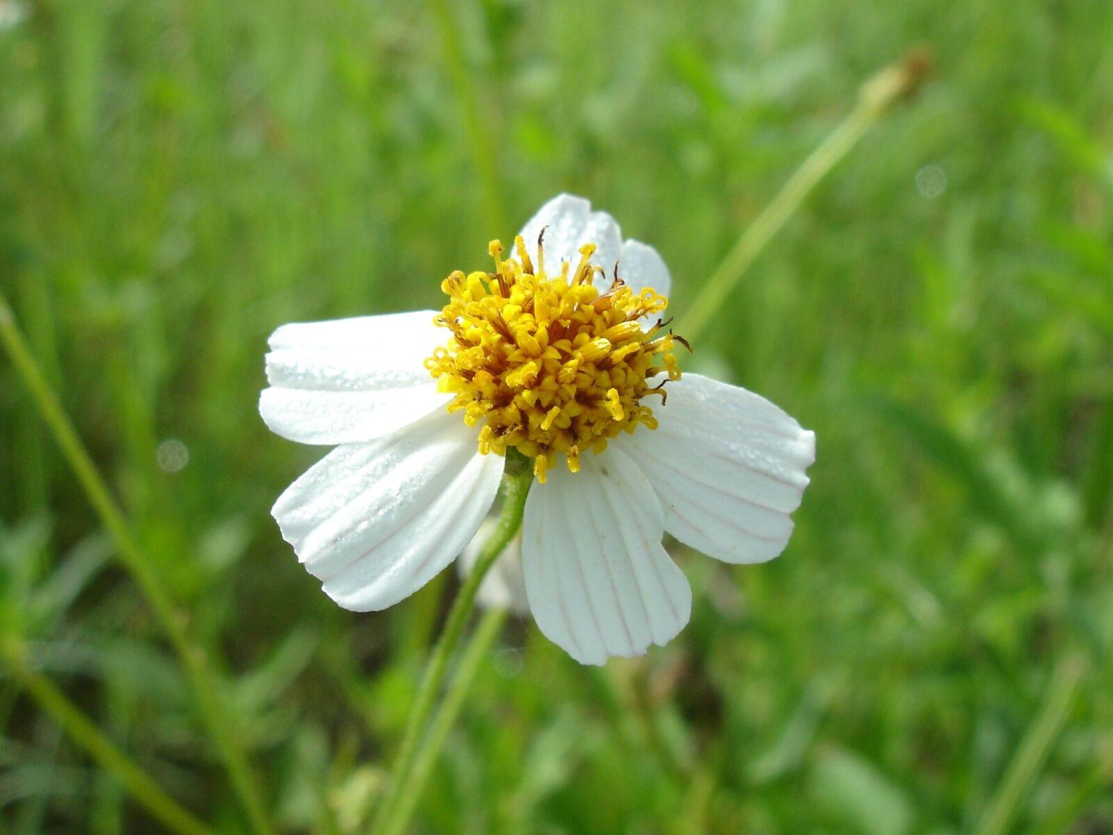 flower, white flower, nature