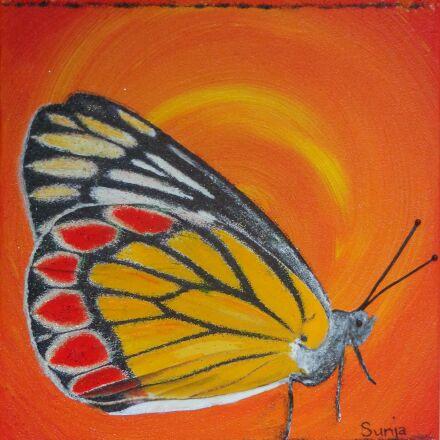 butterfly, orange, gonepteryx rhamni, Sony DSC-W690