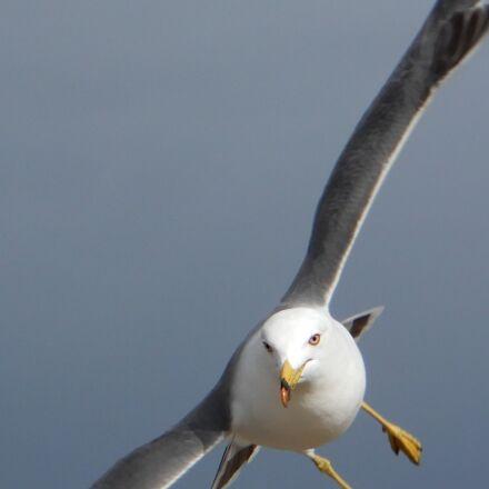 animal, sky, beach, Nikon COOLPIX A900
