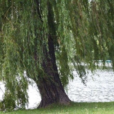 lake, tree, nature, Panasonic DMC-FS16