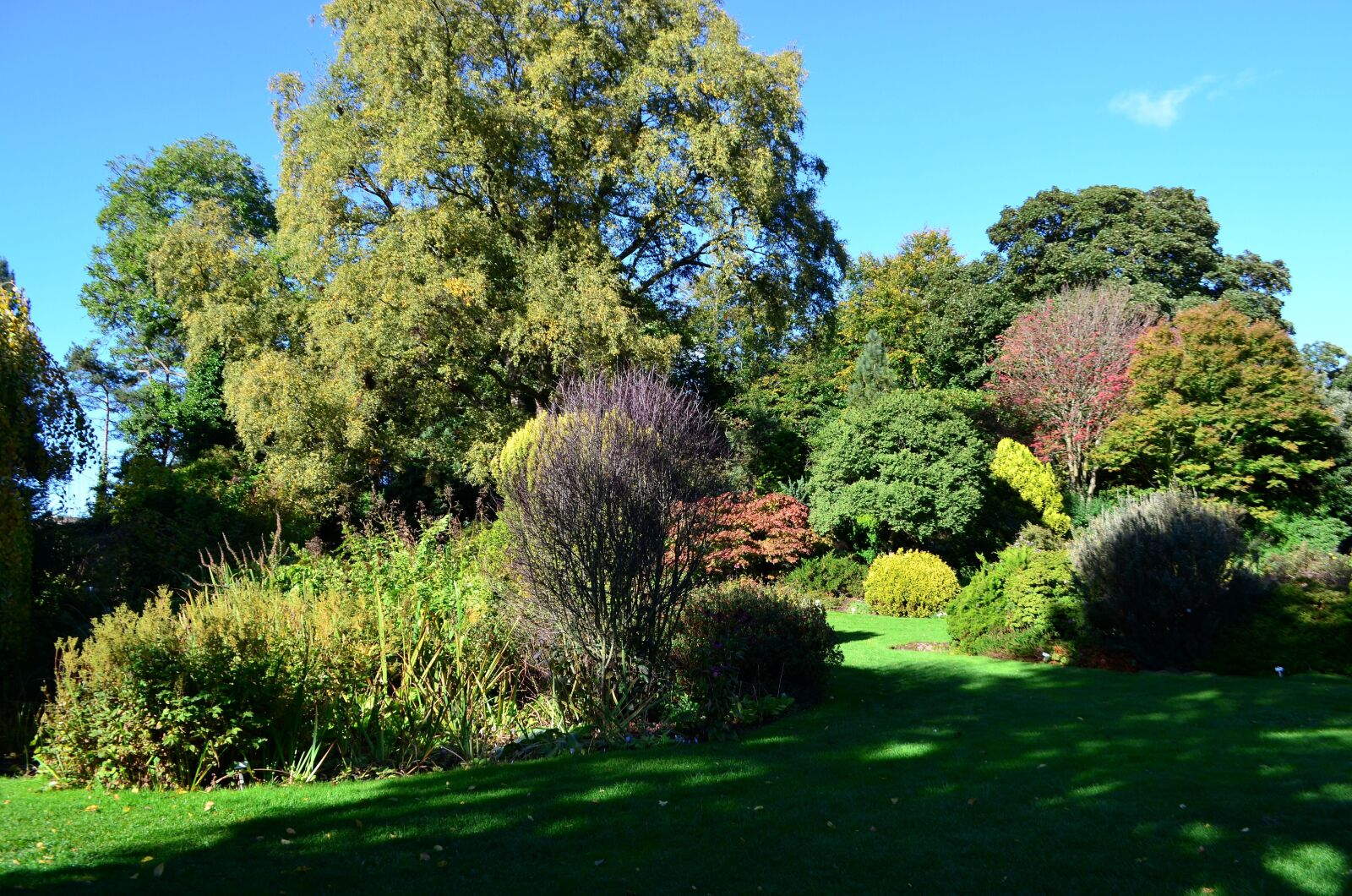 "Nikon D5100 sample photo. ""Summer, scotland, landscape, trees"" photography"