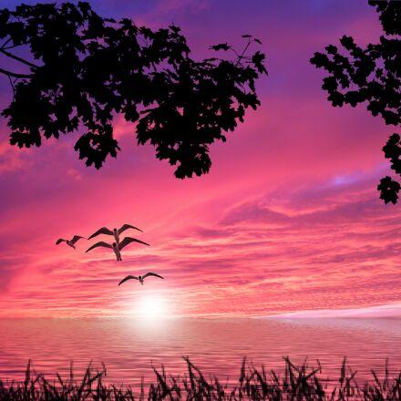 sunset, water, grass, Panasonic DMC-FS10