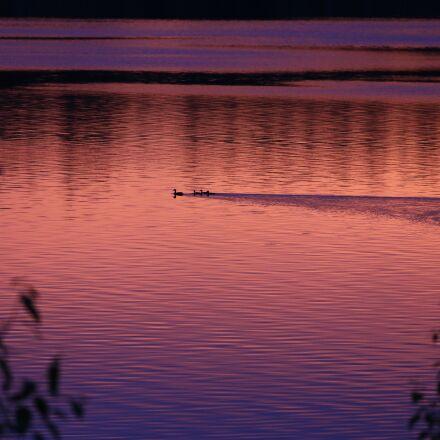 lake, sunset, ducks, Canon EOS 6D