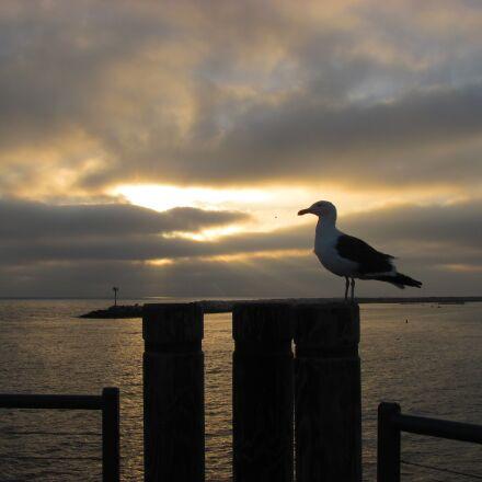 seagull, sunset, pier, Canon POWERSHOT SX120 IS