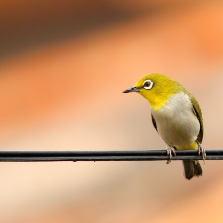 animal, bird, macro, Canon EOS REBEL T3I