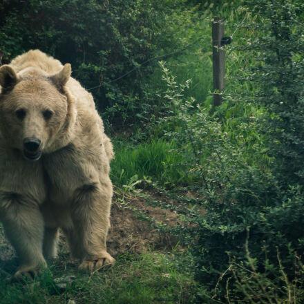bear, zoo, Sony SLT-A58