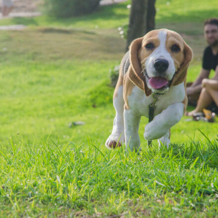 dog, family, grass, happiness, Nikon D5100