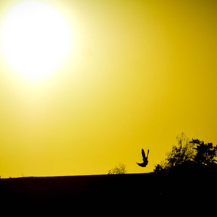 black, brid, love, sun, Nikon 1 V2