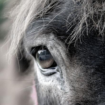 animal, eye, Nikon D40X