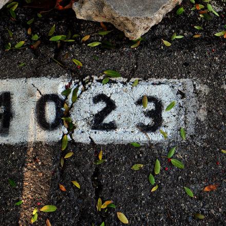 4023, leafs, number, street, Nikon D300S