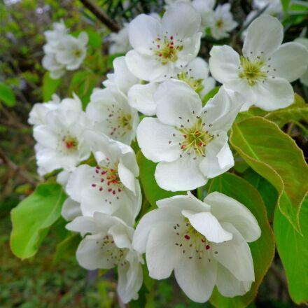 flower, plant, nature, Sony DSC-W630