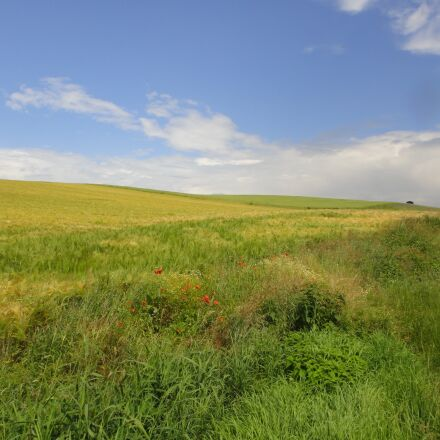walk, field, landscape, Sony DSC-TX5