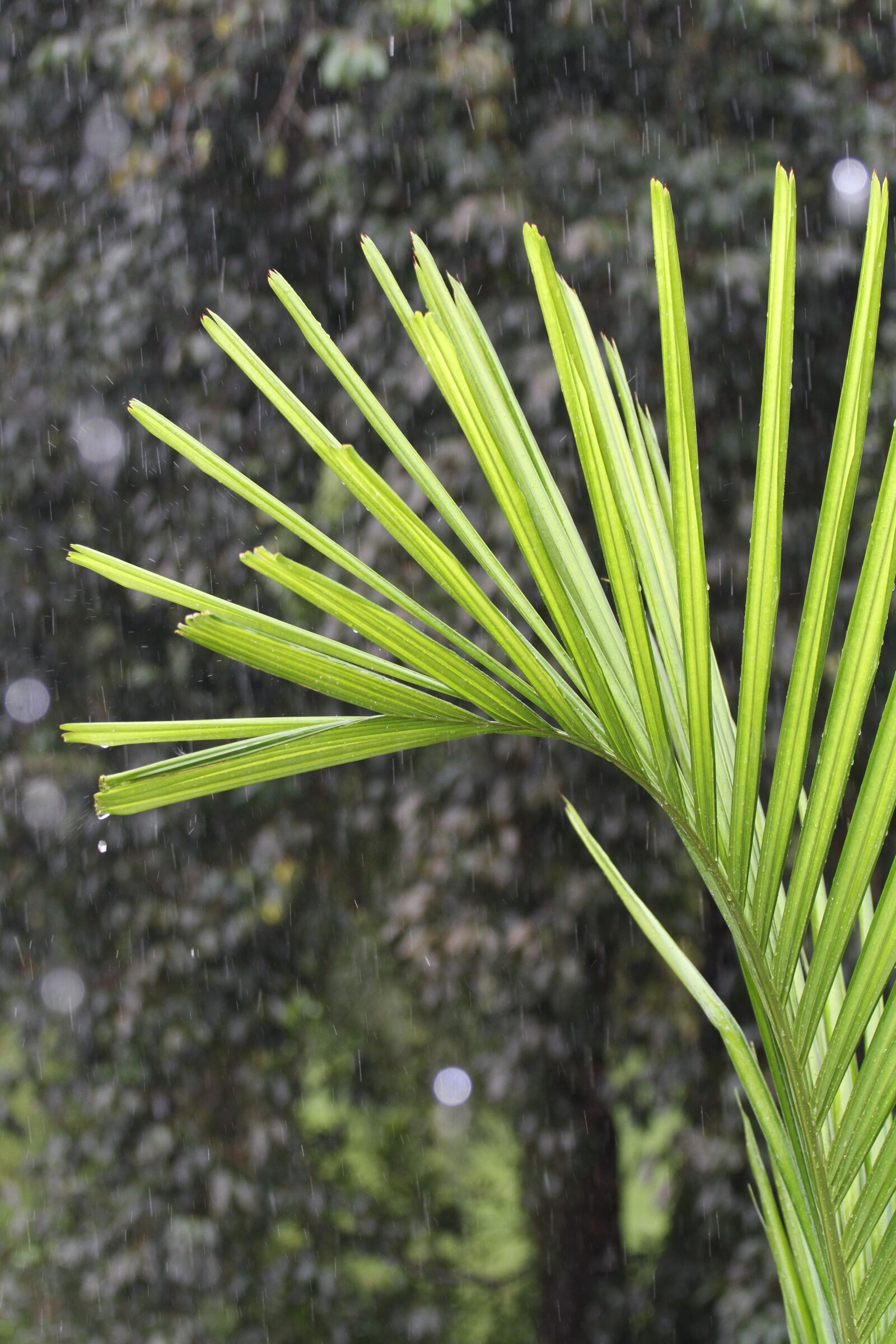 """Canon EOS 7D sample photo. """"Green, plant, curve"""" photography"""