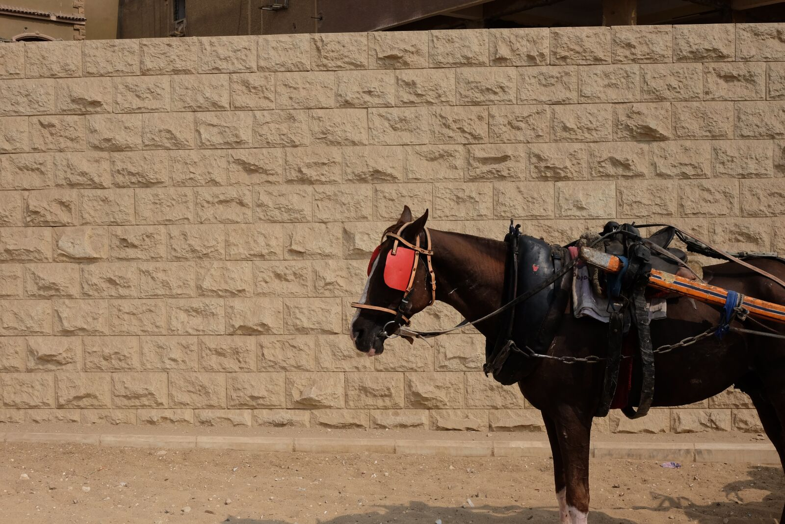 "Fujifilm X-T1 sample photo. ""Horse, street, transport"" photography"