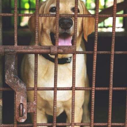 cage, fence, animal, Canon EOS 70D