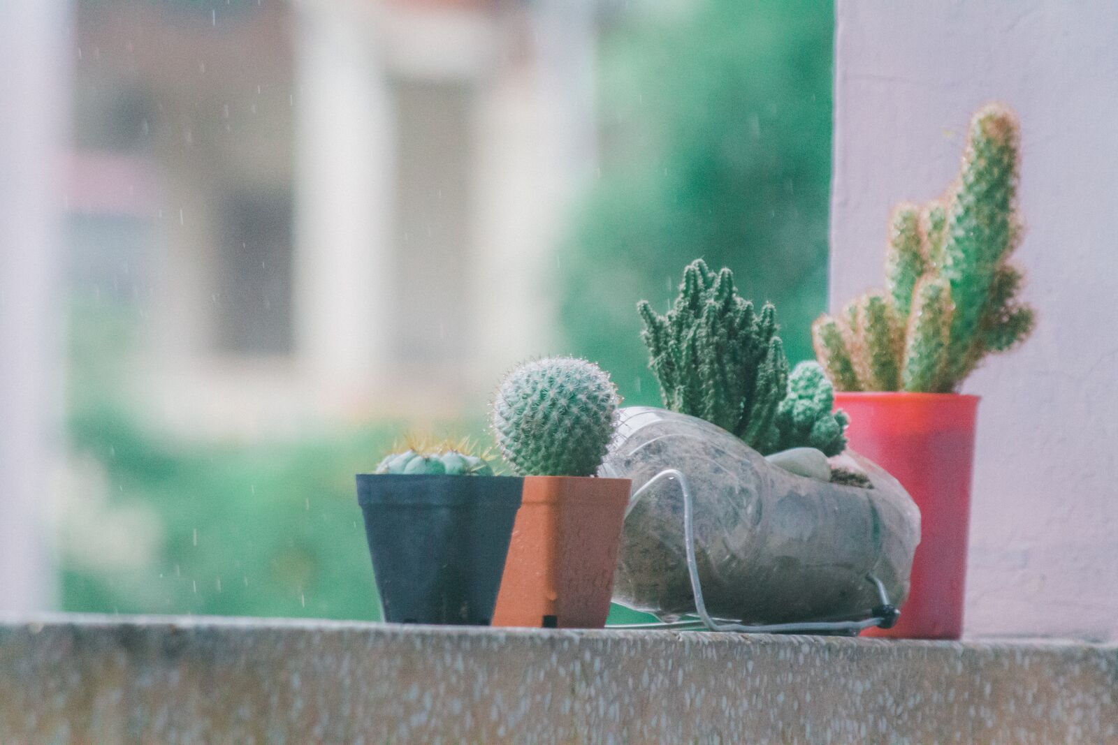 "Canon EOS 7D sample photo. ""Cactus, cacti, succulents"" photography"