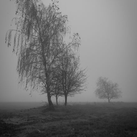 burnout, mourning, depression, Sony ILCE-7SM2