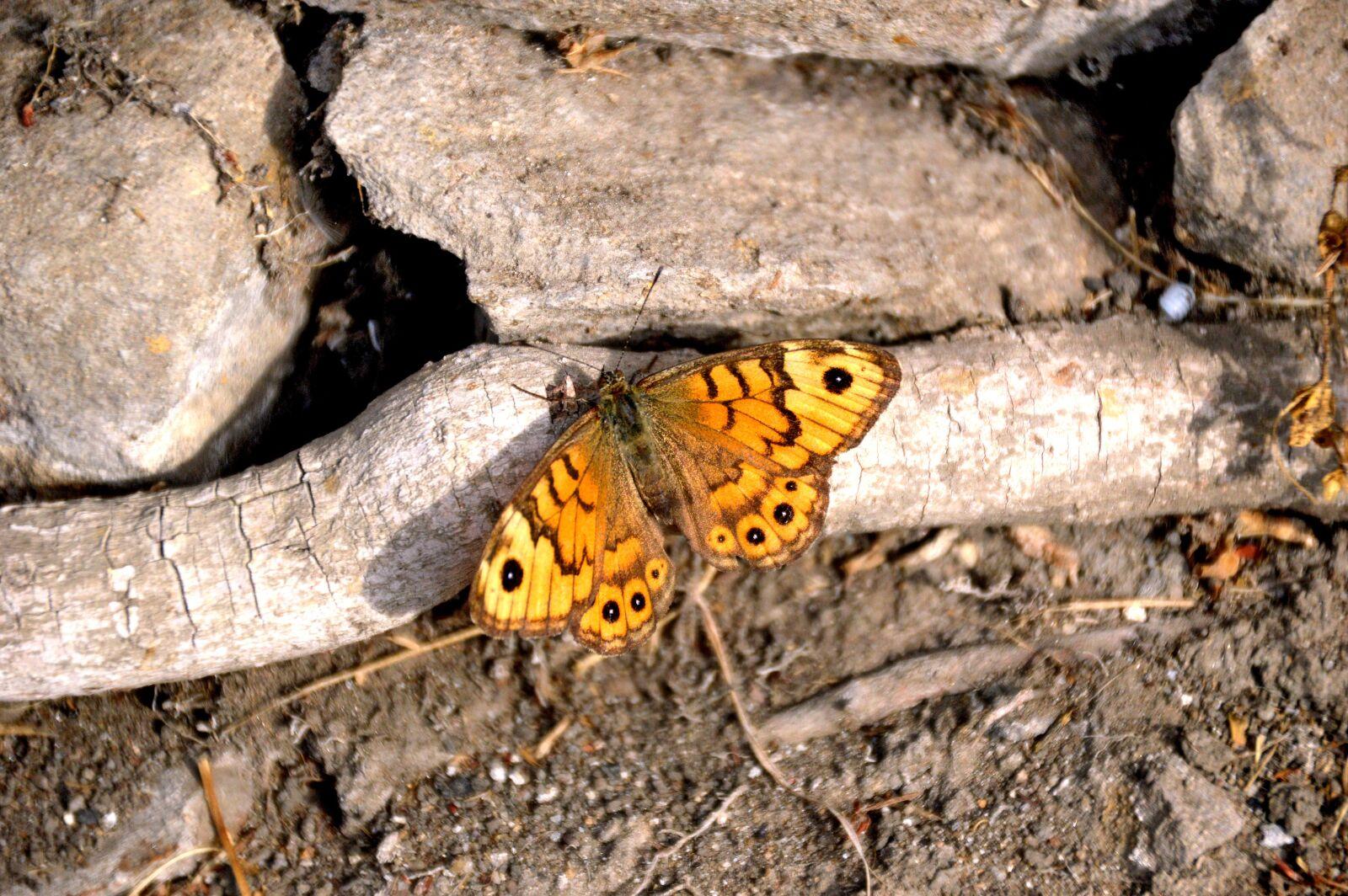 "Nikon D3200 sample photo. ""Schmetterling, perlmuttfalter, tagfalter"" photography"