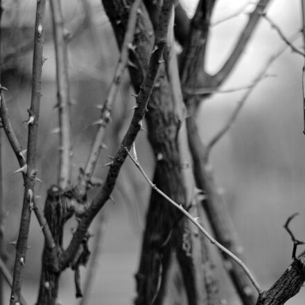 black, and, white, blackwhite, Canon EOS 1100D