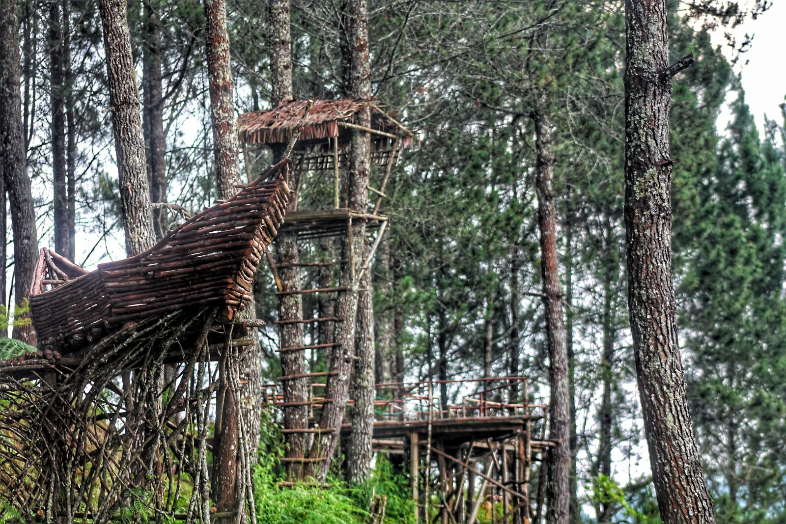 """Canon EOS 1100D (EOS Rebel T3 / EOS Kiss X50) sample photo. """"Forest, bandung, tour"""" photography"""