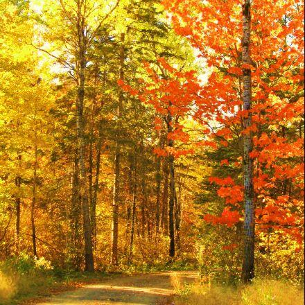 autumn, fall, trees, Canon POWERSHOT SD880 IS
