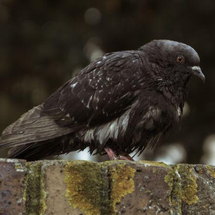 bird, nature, fauna, Canon EOS 60D