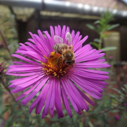 bee, dusting, nature, Fujifilm FinePix S4080
