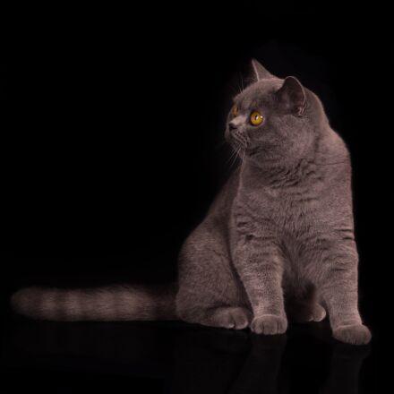 cat, kitten, cats, Sony SLT-A77