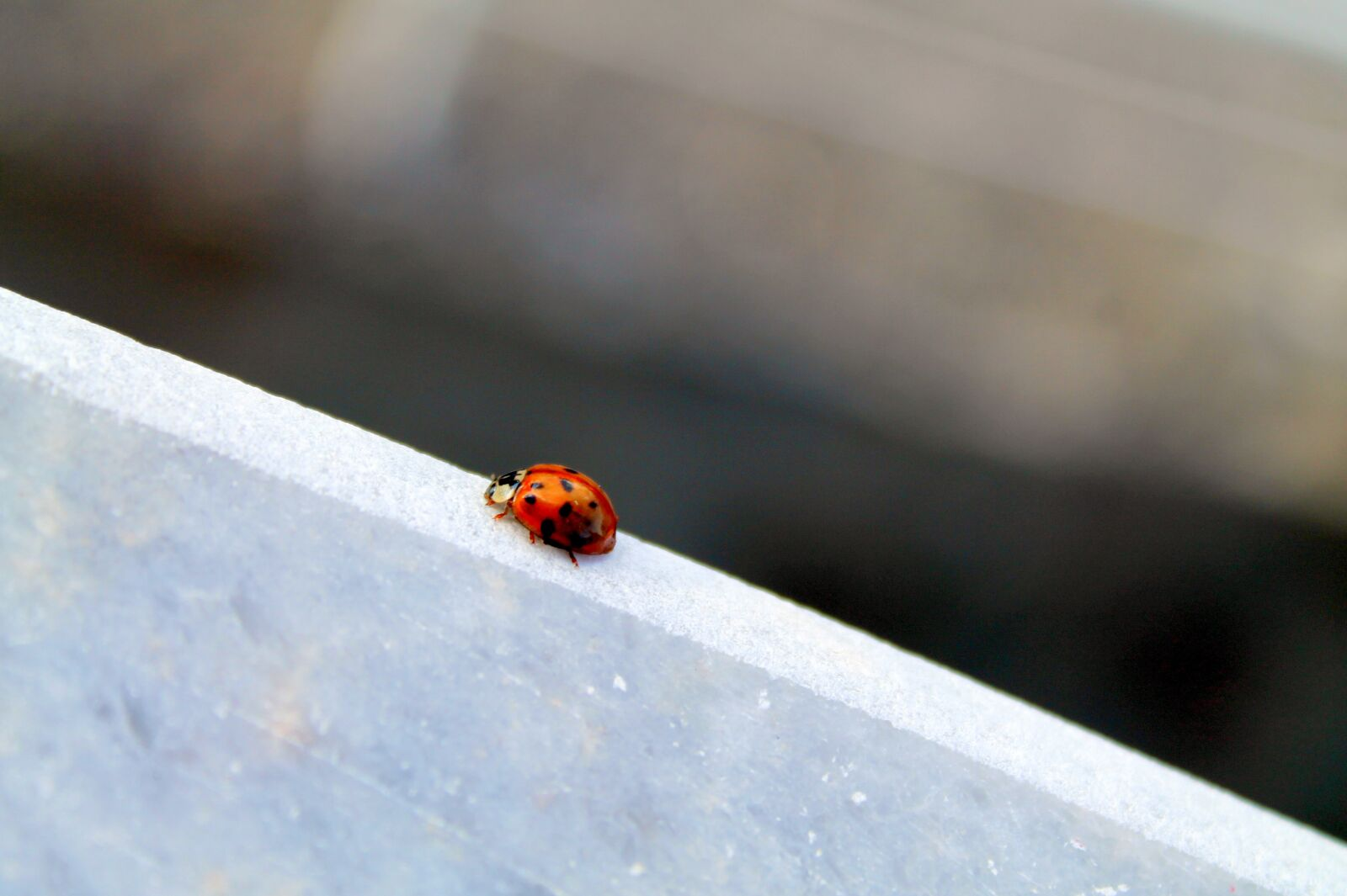 "Canon EOS 1100D (EOS Rebel T3 / EOS Kiss X50) sample photo. ""Ladybug, bug, little"" photography"