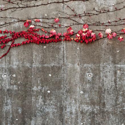 close, up, concrete, flora, Nikon D300