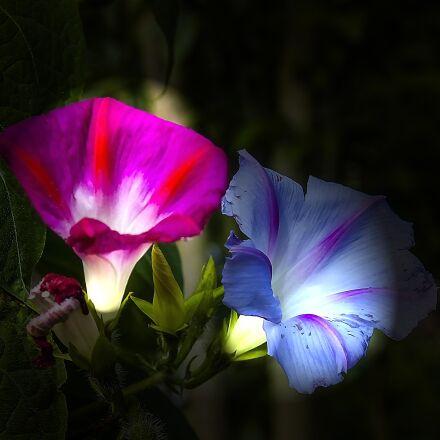 flower, garden, blossom, Sony DSC-V3