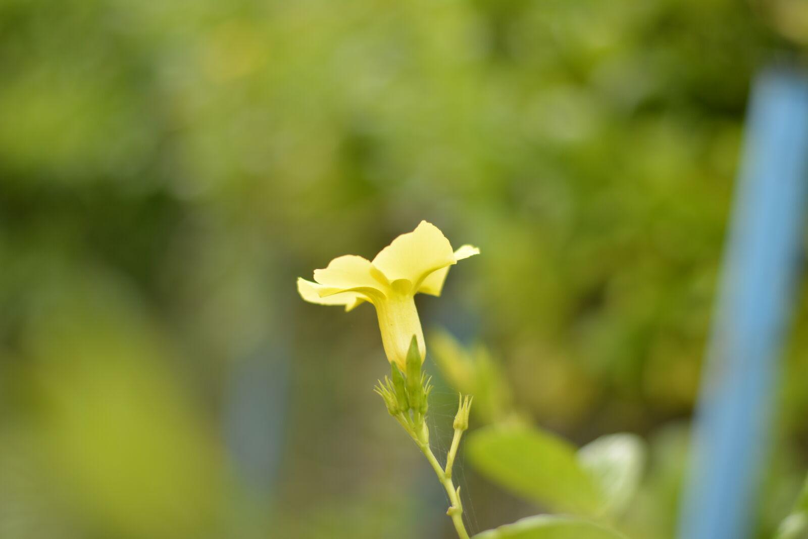"Nikon D5200 sample photo. ""Yellow, car, yellow, flowers"" photography"