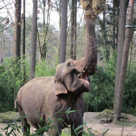 elephant, eats, zoo, Canon IXUS 155