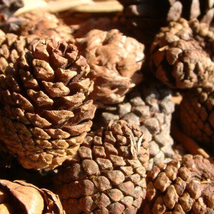 pineapple, pine, brown, Fujifilm FinePix S602 ZOOM