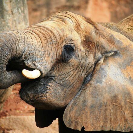 zoo, elephant, Canon EOS 5D