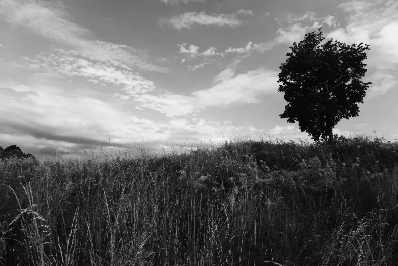 tree, meadow, sky