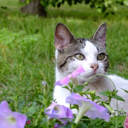 white, cat, kitty, Fujifilm FinePix HS25EXR