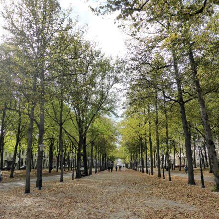 nature, autumn, herfsttafreel, Panasonic DMC-TZ40