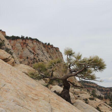 tree, banzai, utah, Canon EOS 1100D