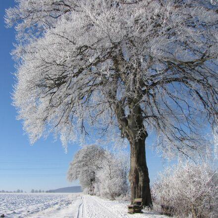 büren, winter, tree, Canon POWERSHOT SX1 IS