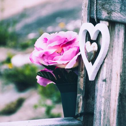 wood, bench, love, summer, Nikon D5500