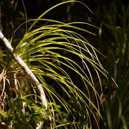 rainforest, grass, backlighting, Sony ILCE-7