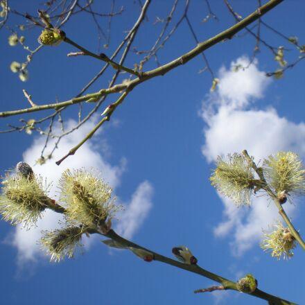 spring, spring sky, clouds, Nikon COOLPIX S210