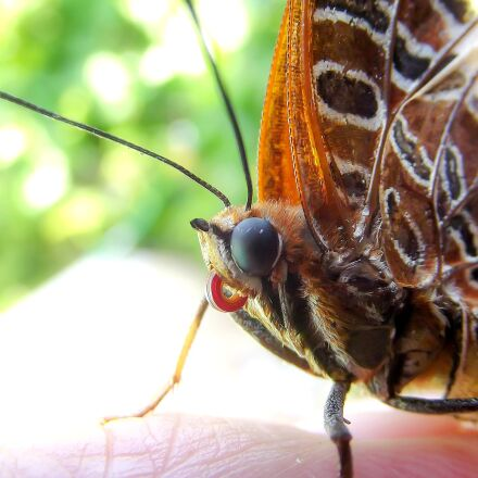 butterfly, garden, nature, Fujifilm FinePix S2960