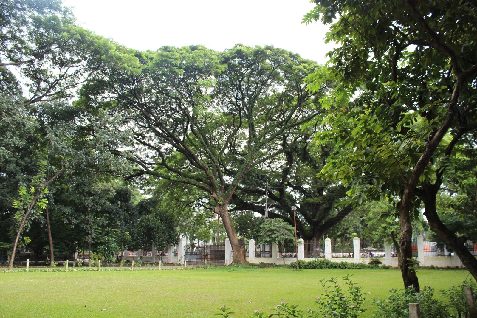 "Canon EOS 600D (Rebel EOS T3i / EOS Kiss X5) sample photo. ""Tree, green, nature"" photography"