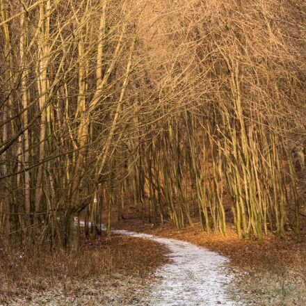 road, snow, forest, Canon EOS 700D