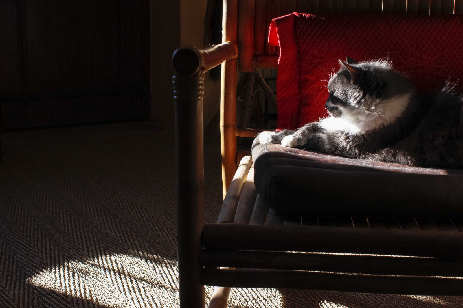 cat, comfy, sunlight